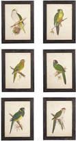 OKA Framed Parrot Prints, Set of 6