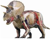 N. 4D Triceratops Anatomy Model by John Hansen Co.