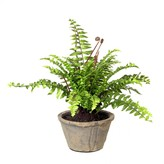 Graham and Green Potted Faux Fern