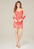 Bebe Rosa Embroidered Mesh Dress