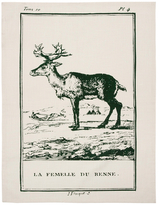 Thomas Paul Reindeer Tea Towel