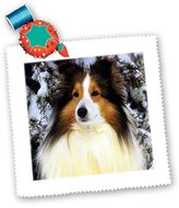 3dRose LLC qs_640_1 Dogs Sheltie/Shetland Sheepdog - Sheltie - Quilt Squares