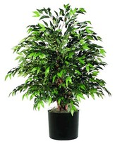 "Vickerman Smilax Extra Full Bush on three or more Dragonwood trunks with Black Plastic Pot - Green (48"")"