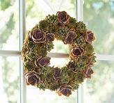 Pottery Barn Live Succulent Wreath