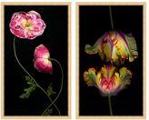 Pottery Barn Tendril Blooms & Parrot Tulips Framed Print