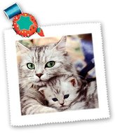 3dRose qs_304_1 Cats Quilt Square, 10 by 10-Inch