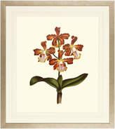 """Art Virtuoso Orchids on Light Cream Framed Art Print, 24.75""""x27.625"""""""