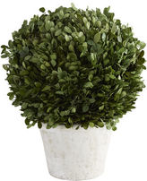 Pier 1 Imports Preserved Boxwood Short Topiary