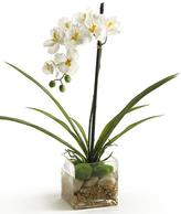Orchid in Square Glass Vase