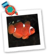 3dRose qs_1110_1 Clownfish Quilt Square, 10 by 10-Inch