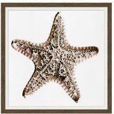 Pottery Barn Neutral Starfish Canvas