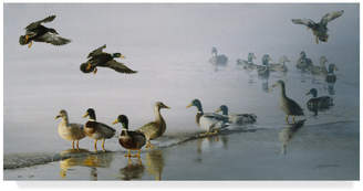 "Rusty Trademark Fine Art ""Mallards "" by D. Rust, Canvas Art"