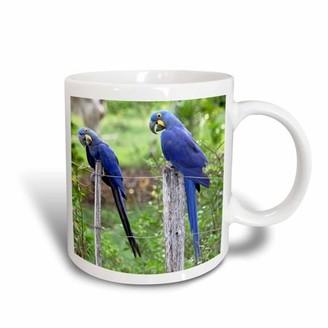 3drose 3dRose Brazil, Pantanal, endangered Hyacinth Macaw, birds - SA04 KWI0096 - Kymri Wilt, Ceramic Mug, 15-ounce