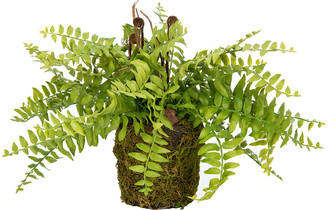 Parlane - Fern Plant in Soil - Green/Brown