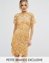 Paper Dolls Petite Allover Premium Lace Pencil Dress