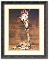 """Amanti art """"Makulu - Giraffe First Kiss"""" Framed Art Print by Ron D'Raine"""