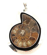 Charles Albert Sterling Silver Fossilized Ammonite Pendant
