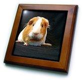 3dRose LLC ft_1062_1 Guinea Pig - Guinea Pig - Framed Tiles