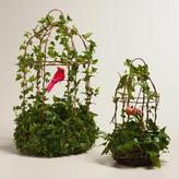 Live Ivy Hanging Birdcage