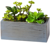 Torre & Tagus Small Solaro Rectangular Potted Cluster Succulent