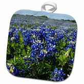 """3D Rose Bluebonnets-Freyburg-Texas-Us44 Fvi0007-Franklin Viola Pot Holder, 8"""" x 8"""""""