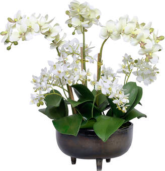 Diane James Phalaenopsis Orchids