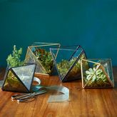 west elm Faceted Terrariums