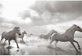 "Drew Doggett Photography Drew Doggett - In Stride 24""L X 33""W"