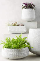Anthropologie Netara Herb Planter Set
