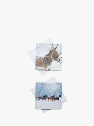 John Lewis & Partners Photo Donkey Charity Christmas Cards, Pack of 10