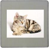Fotomax Cat, Pet, Striped, Kitten, Young hardboard square fridge magnet