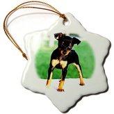 Mini A Ture 3dRose LLC orn_592_1 Dogs Miniature Pinscher - Pinscher Puppy - Ornaments