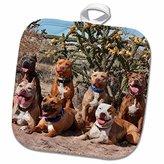 "3D Rose American Pitt Bull Terrier Dogs-Cactus-Us32 Zmu0025-Zandria Muench Beraldo Pot Holder, 8"" x 8"""