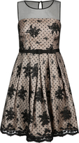 City Chic Embroidered Ava Dress