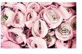 Pottery Barn Flower Kisses by Lupen Grainne