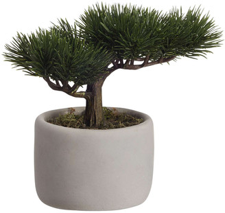ASA Selection - Deko Bonsai Mini Pine Plant