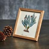 Graham and Green Framed Square Multi Stem Cactus Print