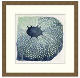Pottery Barn Sea Urchin Framed Print