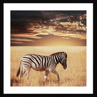Cooper Black Zebra Sunset Photographic Framed Print