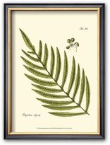 "Art.com Small Antique Fern I"" Framed Art Print"