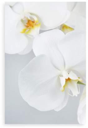 """Orchids Wall Art, 60"""" x 40"""""""