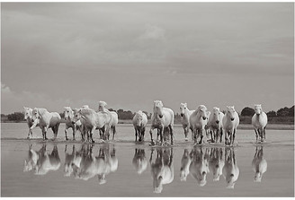 "Drew Doggett Photography Drew Doggett - On the Shores 24""L X 33""W"