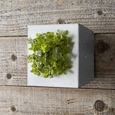 Williams-Sonoma Williams Sonoma Mini Galvanized Vertical Wall Planter