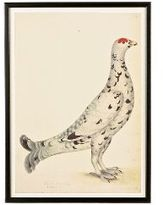 Speckled Grouse Decoy Print