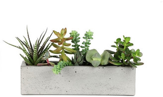 Rough Fusion Concrete Windowsill Planter 12""