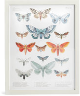 Marks and Spencer American Lepidoptera Wall Art