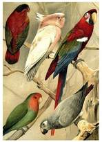 Parrots Illustrated Encyclopedia Print