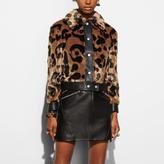 Coach Wild Beast Faux Fur Jacket