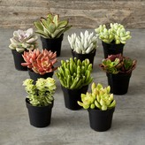 Williams-Sonoma Williams Sonoma Succulent Set