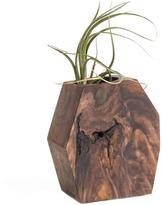 Geometric Wood Succulent or Tillandsia Planter